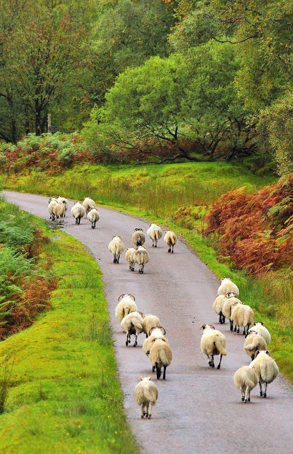 Download Returning home stock image. Image of highlands, farm - 28589019