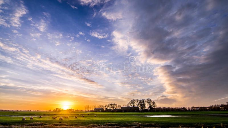 Sheep in meadow with beautiful golden winter sun on blue sky and dark clouds. Trees lined farmhouse on the horizon sun rays shine on grazing sheep in the meadow stock photos