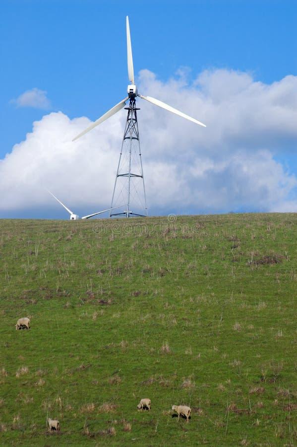 Free Sheep On A Hillside Stock Photos - 577363