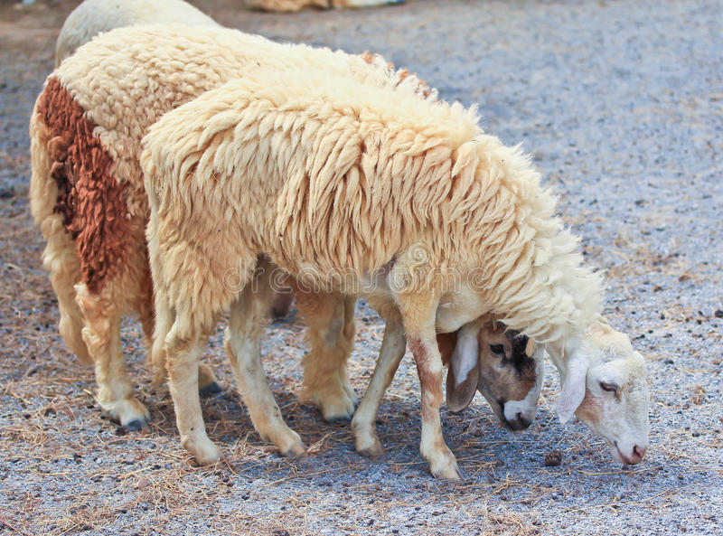Download Sheep portrait stock image. Image of cloned, green, clone - 38264875