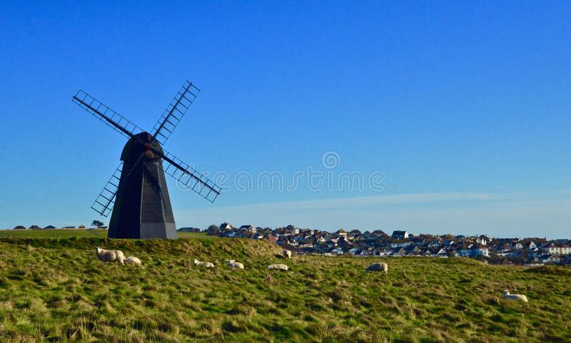 Sheep at Rottingdean Mill, East Sussex, UK. Sheep grazing in field outside Rottingdean Mill in East Sussex, UK against blue skies royalty free stock images