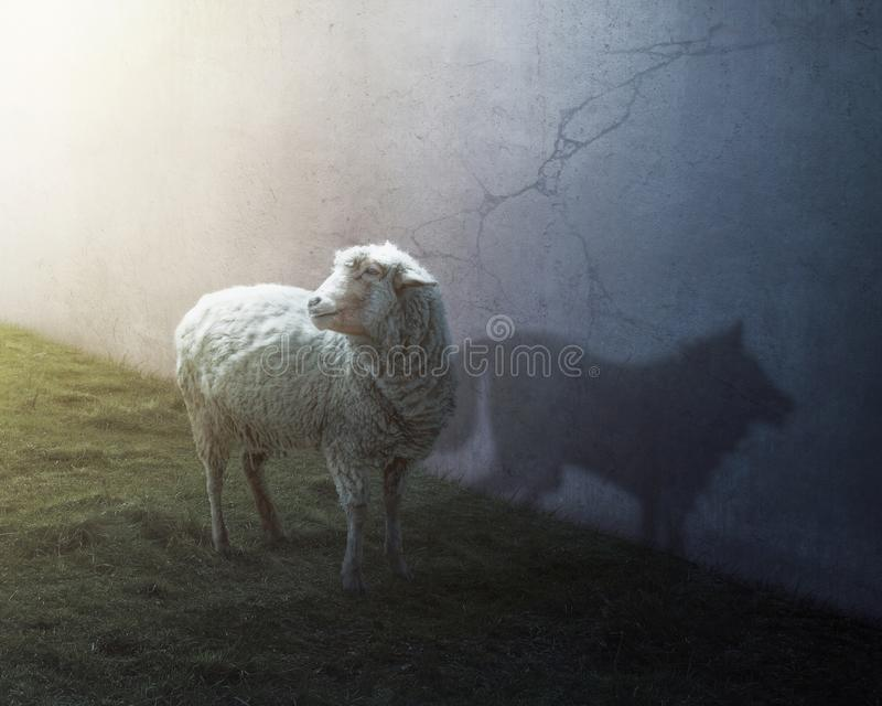 Sheep and wolf stock images