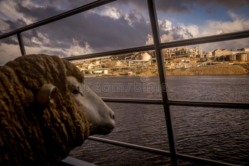 Sheep statue looking at factory from river. Expressing concern royalty free stock photo