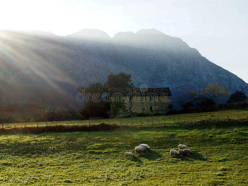 Download Sheep at sunset stock image. Image of hill, farm, mountain - 28034725