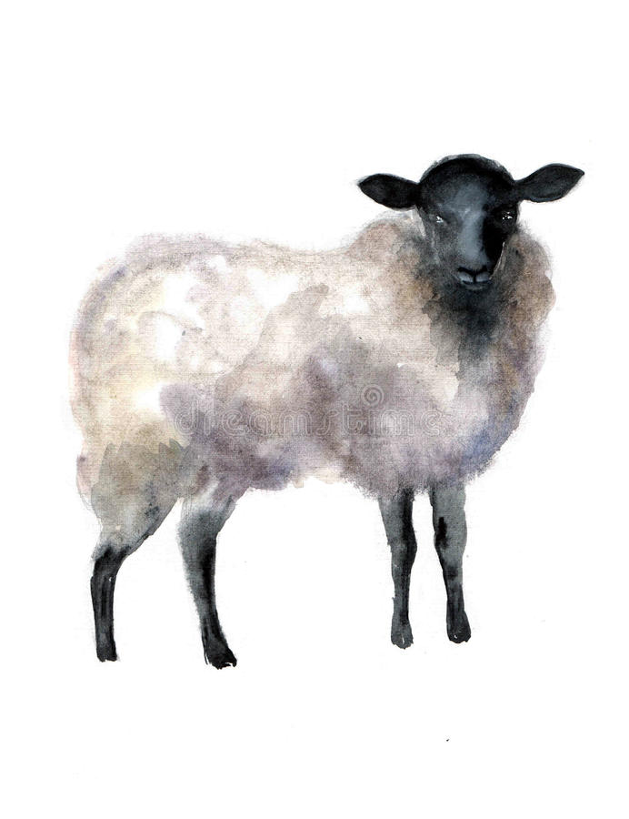 sheep watercolor on the white background. hand drawn cute illustration. Creative farm animals. Background for Muslim Commun royalty free illustration