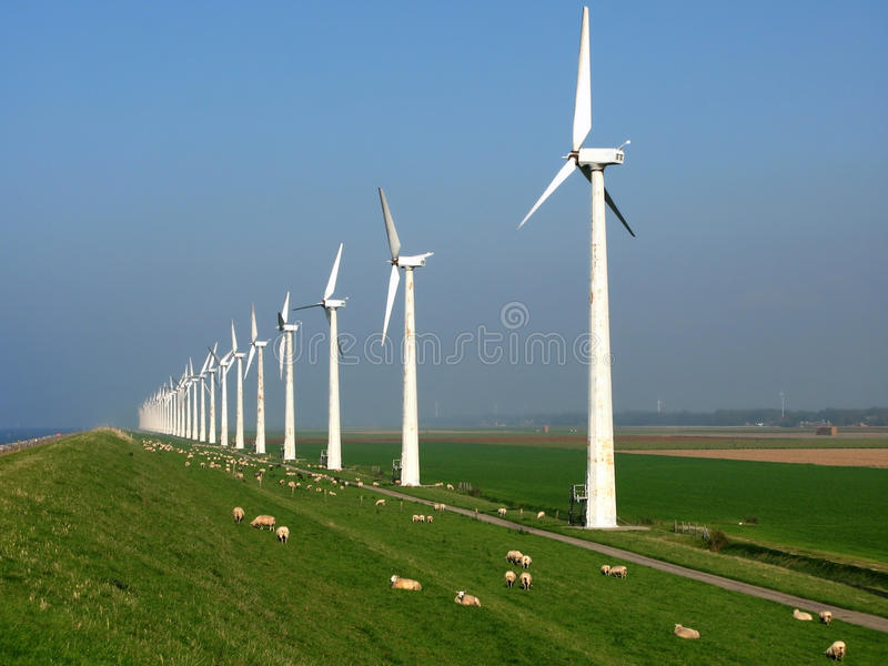 Sheep between the windmills. Sheep and a wind-park in the netherlands royalty free stock photo
