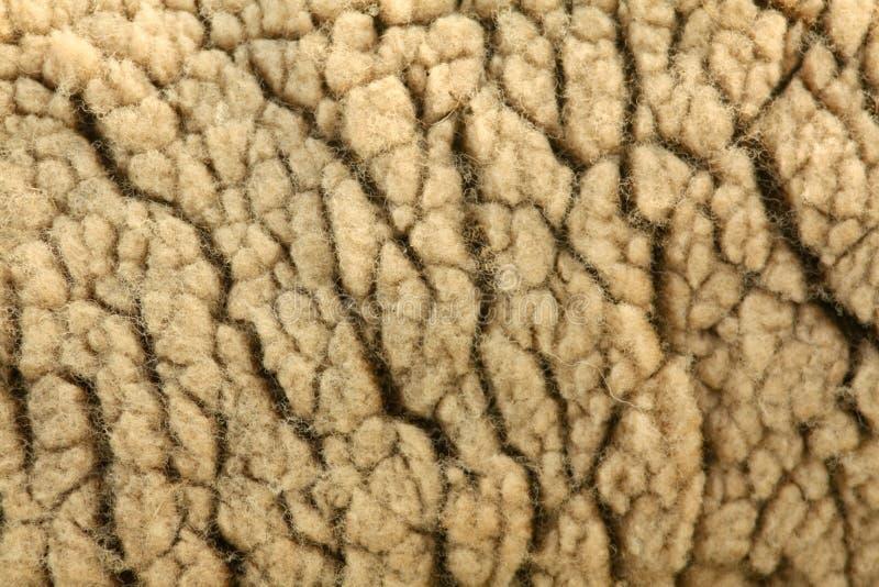 Sheep Wool royalty free stock photo