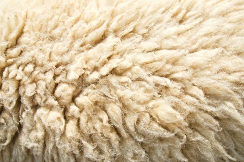 Sheep Wool Skin Royalty Free Stock Photo Image 36545705