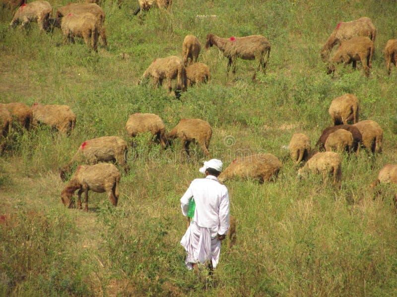 sheepherder stockbilder