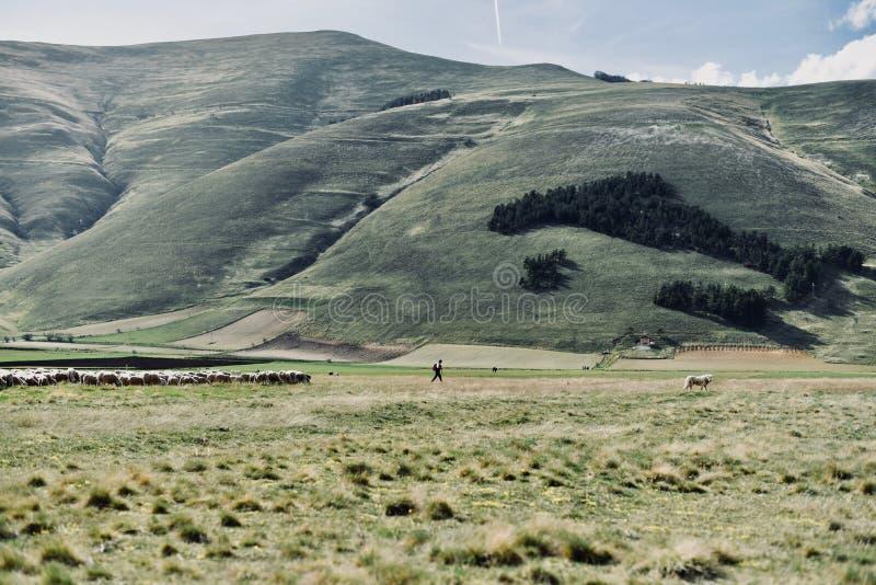 Sheepherder alpino - mappa dell'Italia fotografia stock libera da diritti