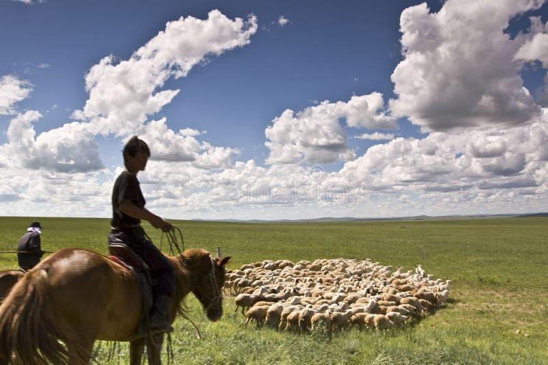 Sheepherder y ovejas fotografía de archivo libre de regalías