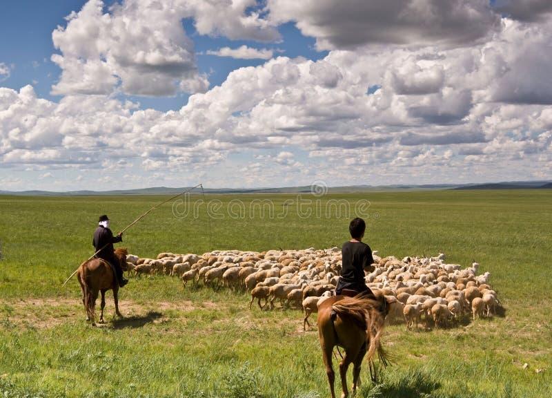 Sheepherder y ovejas fotos de archivo libres de regalías
