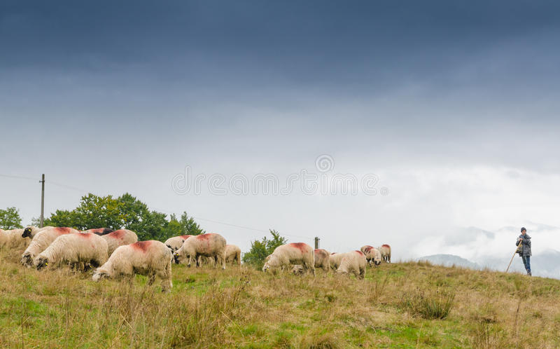 Sheeps που εποπτεύεται από τον ποιμένα στοκ φωτογραφίες με δικαίωμα ελεύθερης χρήσης