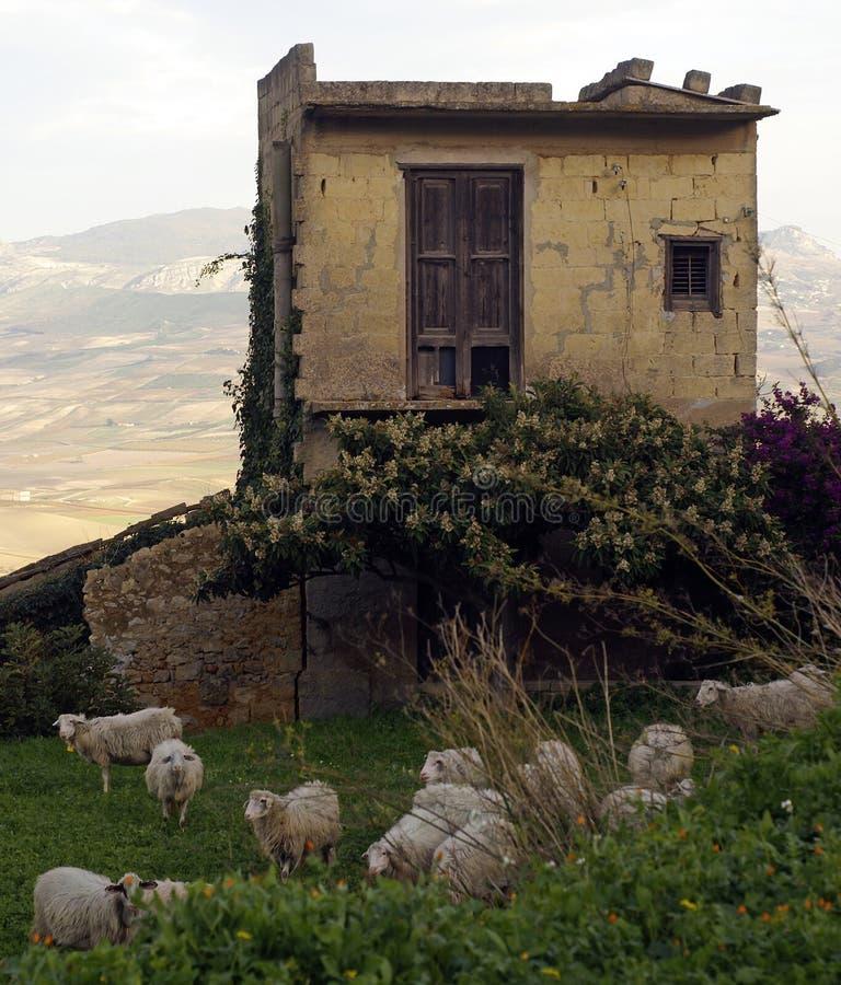 Sheeps e vecchia casa fotografia stock