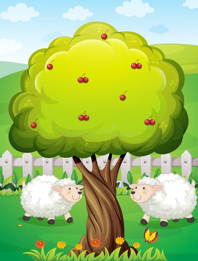 Sheeps inom staketet nära äppleträdet vektor illustrationer