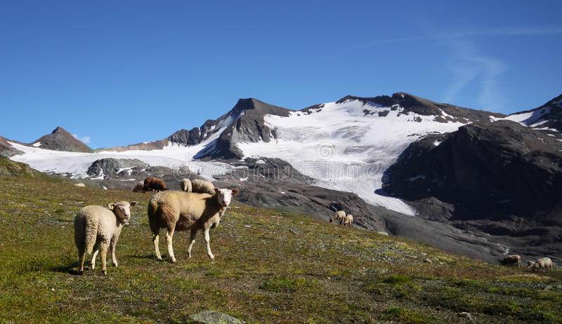 Download Sheeps In The Mountains Royalty Free Stock Images - Image: 22335259