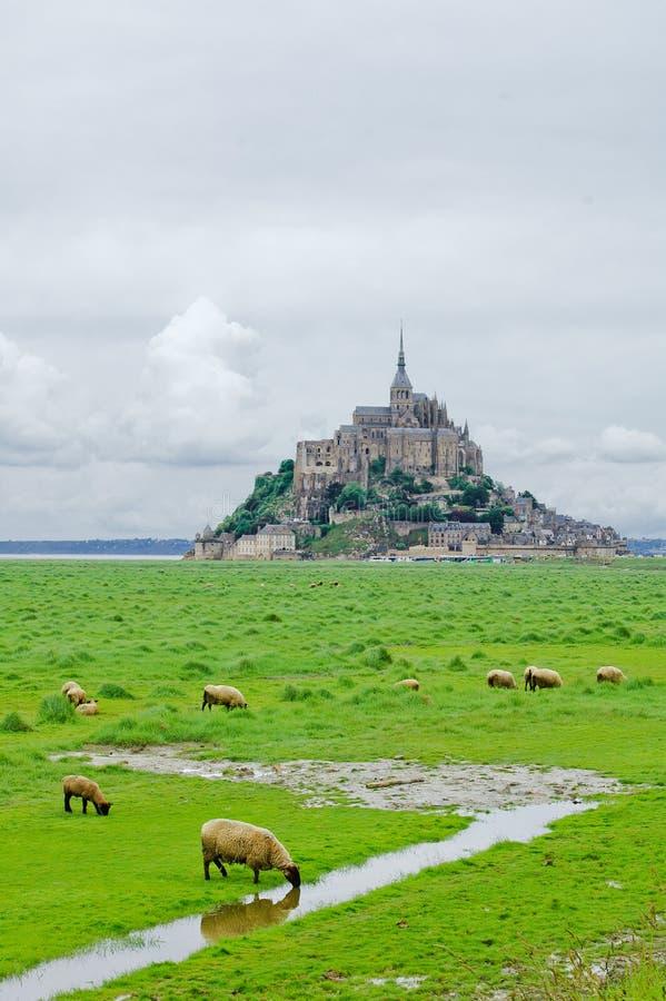 Sheeps nära Mont Sanktt Michel. Normandy Frankrike. arkivfoton