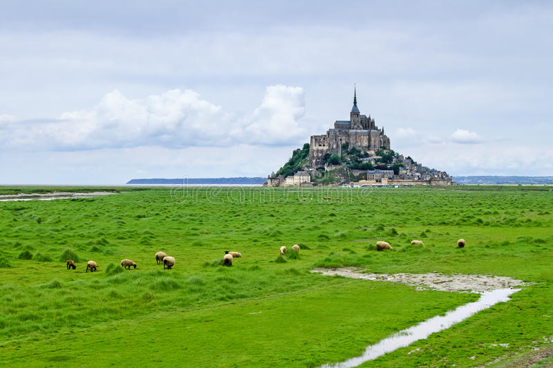 Sheeps nahe Mont Saint Michel. Normandie, Frankreich lizenzfreie stockfotografie