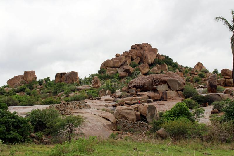 Sheeps roaming around the hill of Hampi, probably unguided stock images