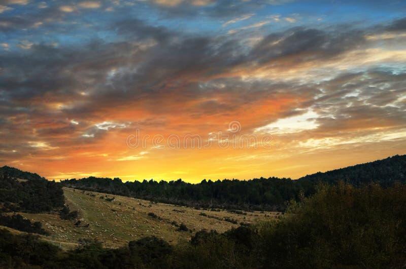 Sheeps at Sunset royalty free stock photo