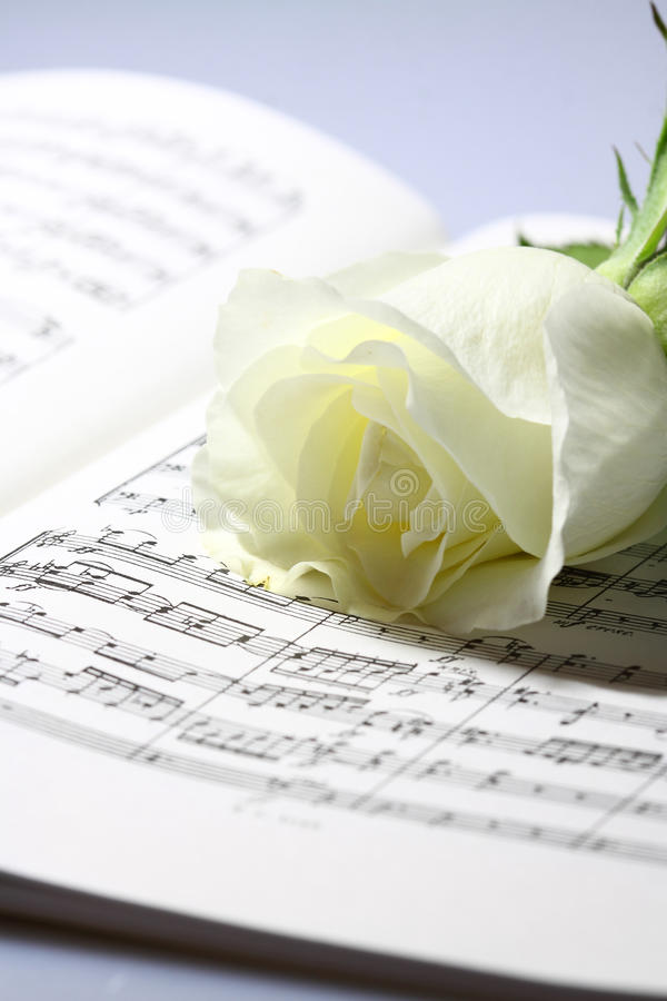 Download Sheet music white rose A stock photo. Image of wave, music - 39500332