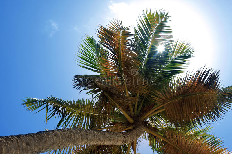 Sheet of a palm tree stock photography