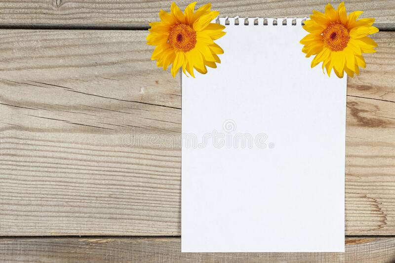 A sheet of white paper attached by sunflowers on a wooden board royalty free stock photography
