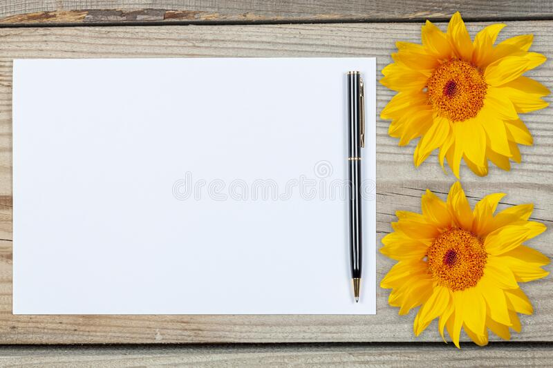 A sheet of white paper surrounded by sunflowers on a wooden background royalty free stock image