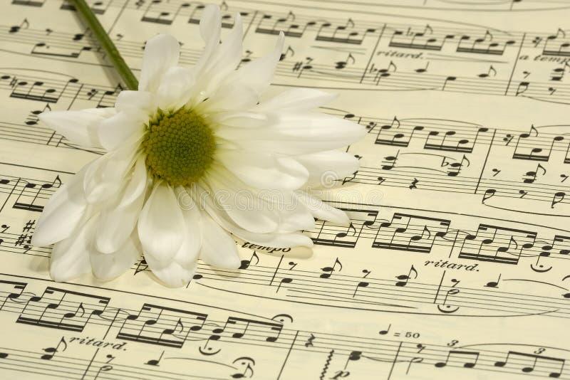 Sheetmusic royalty free stock images