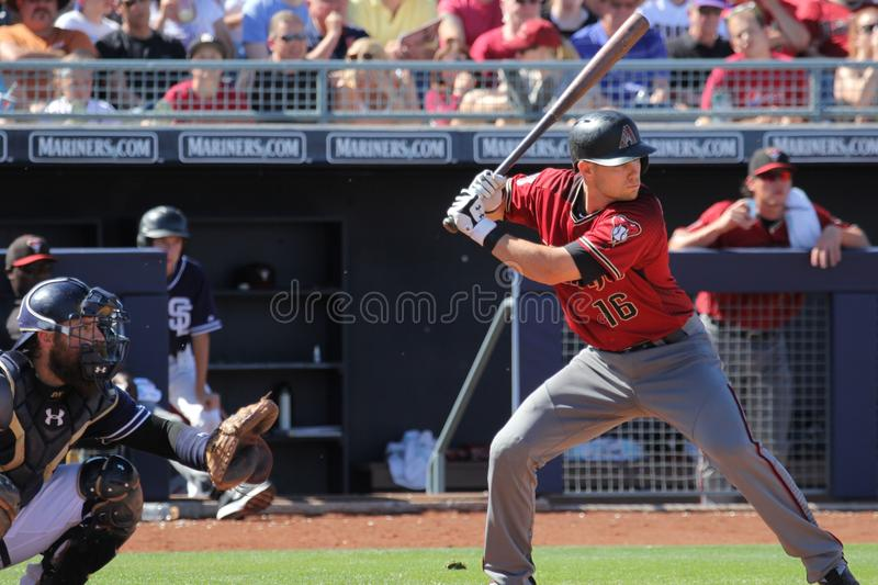 Shelby Miller royalty free stock photos