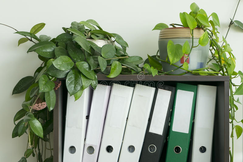 Shelf with accounting files. royalty free stock image