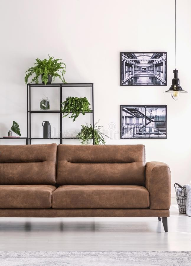 Shelf with green plants behind big comfortable leather sofa in white living room with industrial posters. On the wall stock photography