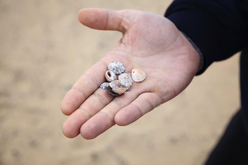 Shell à disposição na praia fotos de stock royalty free