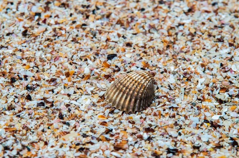 Shell über kleinen Stücken Oberteilen in einem tropischen Strand stockfotos