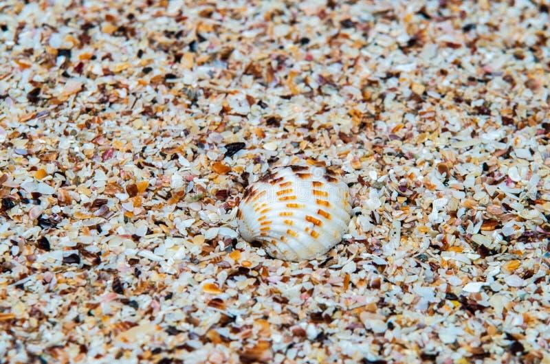 Shell über kleinen Stücken Oberteilen in einem tropischen Strand stockfotografie