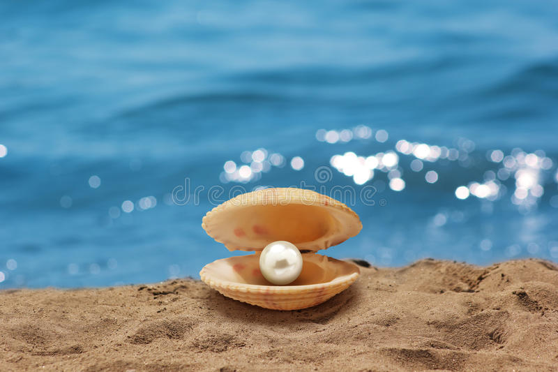 Shell με ένα μαργαριτάρι στοκ εικόνα