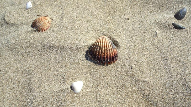 Shell fotografie stock libere da diritti