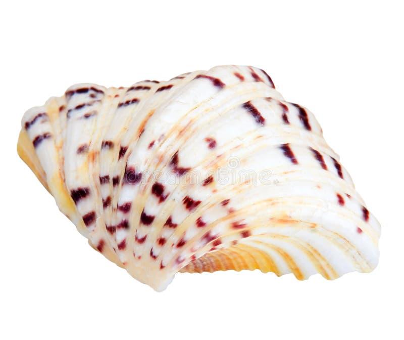 Shell stockfotografie