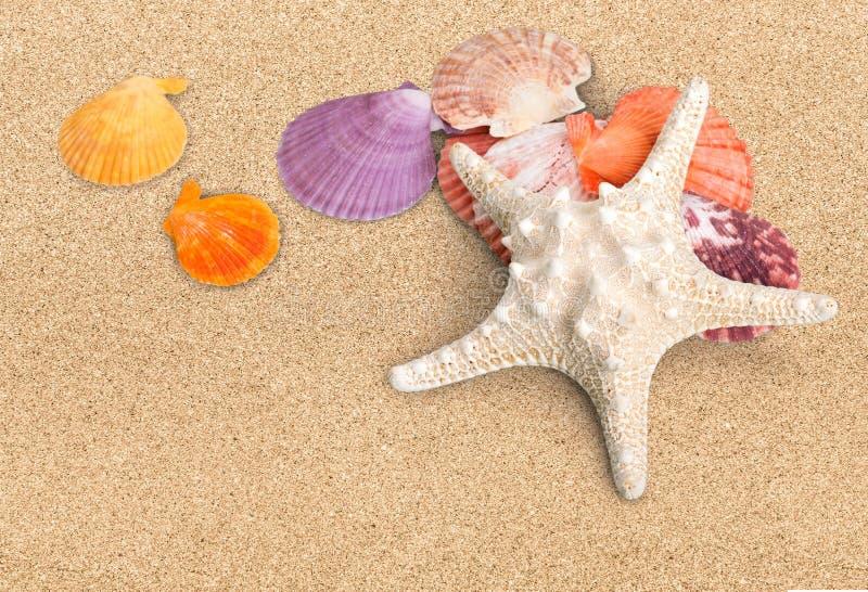 Shell stock fotografie