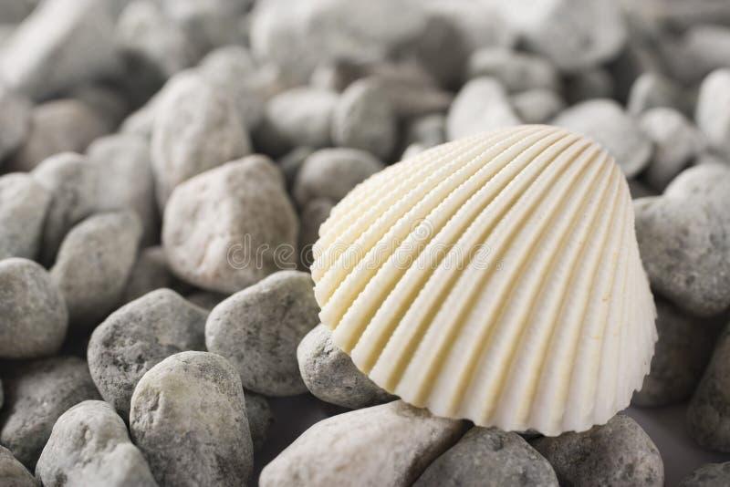 Shell stockbilder