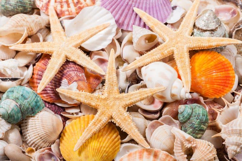 Download Shell immagine stock. Immagine di colorato, corsa, coperture - 117979687
