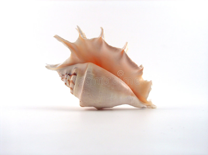 Download Shell stock photo. Image of holiday, souvenir, bottom, fragile - 120148