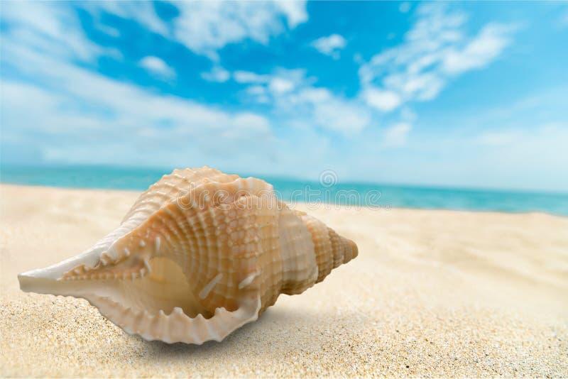 Shell obrazy royalty free