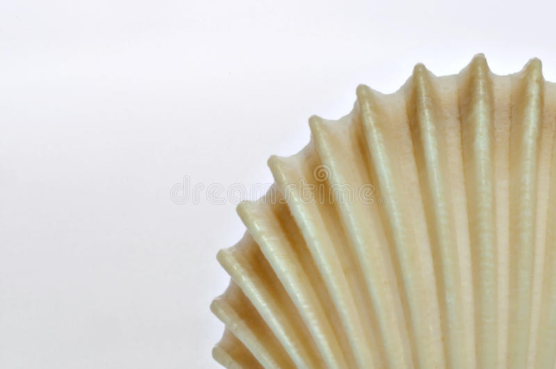 Shell. Close-up of a shell surface stock photo