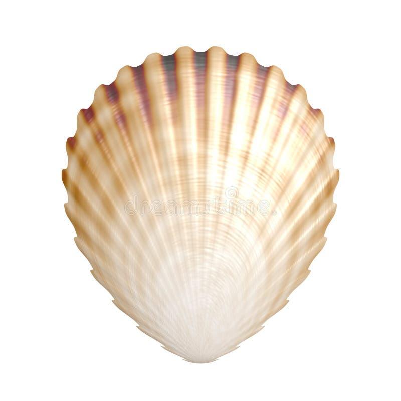 Shell lizenzfreie abbildung