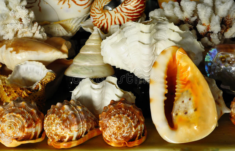 Download Shell Stock Image - Image: 19182201