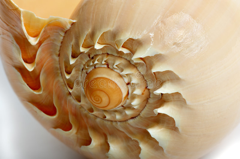 Download Shell - 2 stock image. Image of fractal, yellow, nature - 7623215
