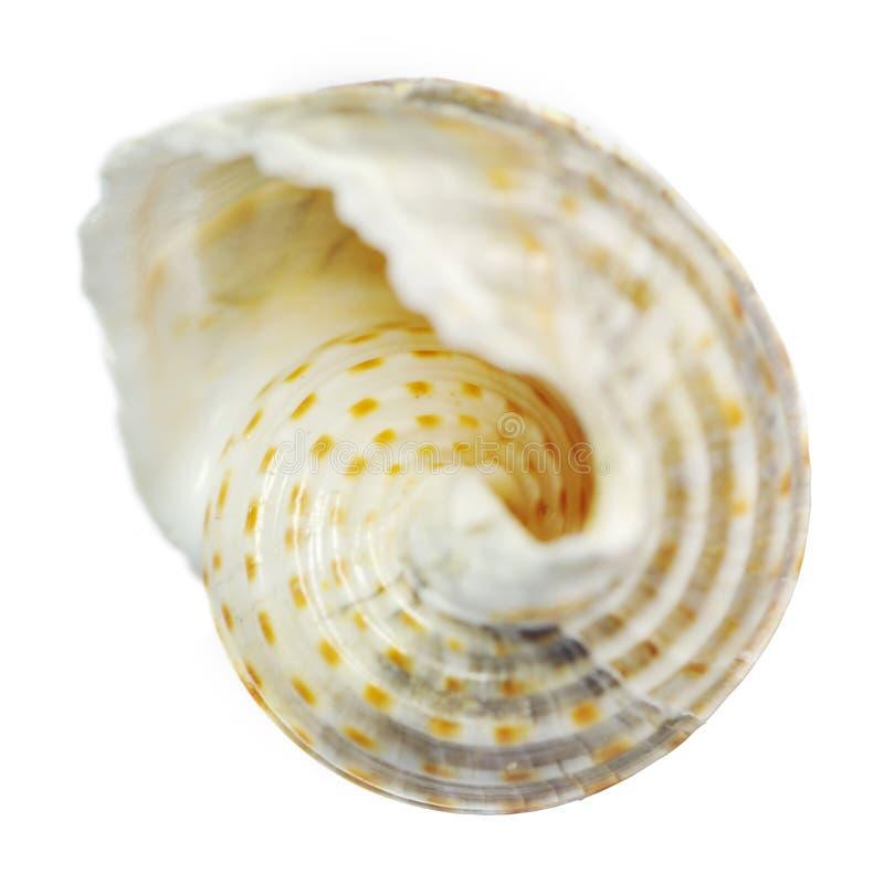Shell stockfotos