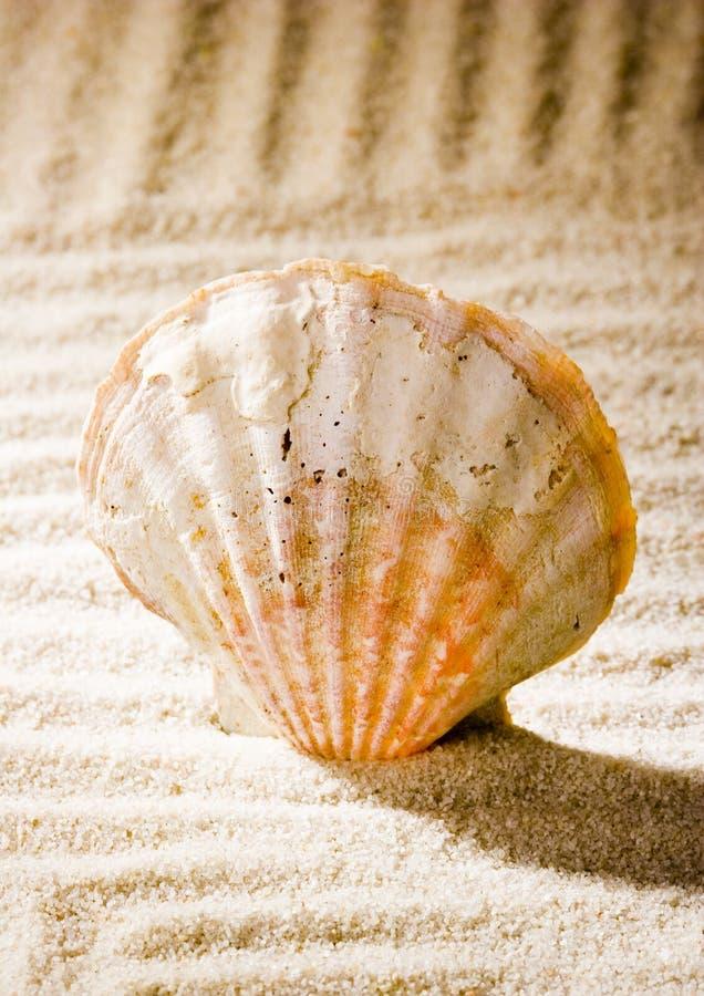 Free Shell Royalty Free Stock Photos - 2077458