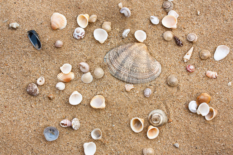 Download Shell stock image. Image of environment, seashells, design - 23415251